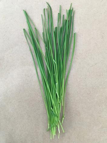 Wheatgrass Shoots