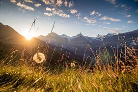 Grindelwald Bussalp.jpg