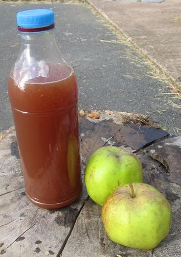 Freshly pressed apple juice