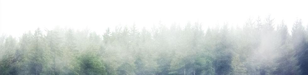 Trees%202_edited.jpg