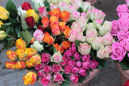 roses-maison-haas-saint-valentin.jpg