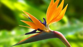 5 fleurs exotiques à adopter d'urgence