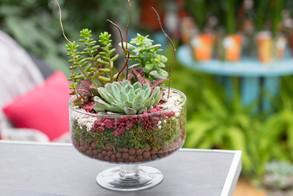 composition-plantes-succulentes-maison-haas.jpg
