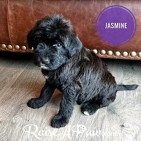Jasmine Ms LightPink.jpeg