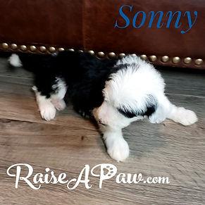 Sonny6.jpeg