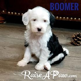 Boomer.jpeg
