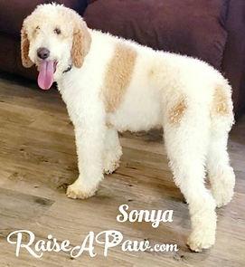 Sonya1.jpg