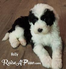 Holly 5.jpg