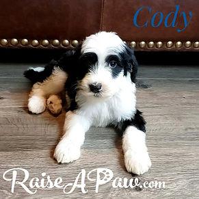 Cody5.jpeg