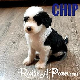 Chip.jpeg