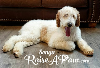 Sonya3.jpg