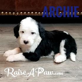 Archie.jpeg