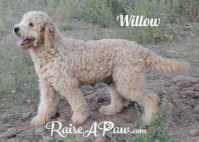 Willow 1.14.jpg