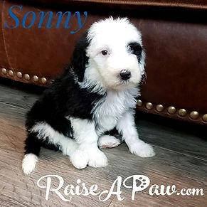 Sonny1.jpeg