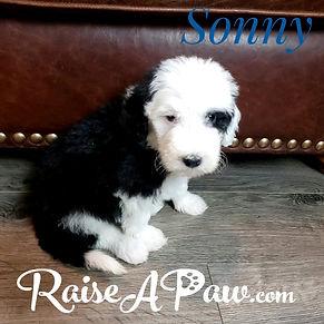 Sonny5.jpeg