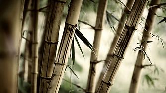 Zen-Nature-Bamboo-bis.png