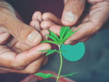 FINELEAF helps cannabis entrepreneurs, investors & governments become part of the cannabis future