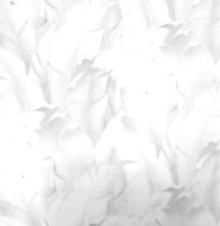 brushed_2021-5414_edited_edited_edited.jpg