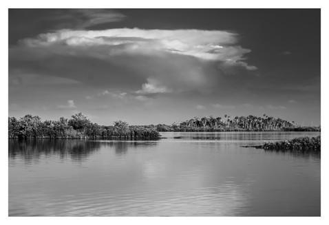 black and white landscape, Homosassa River, homosassa, florida