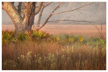 Morning on the marsh, Jekyll Island, Georgia