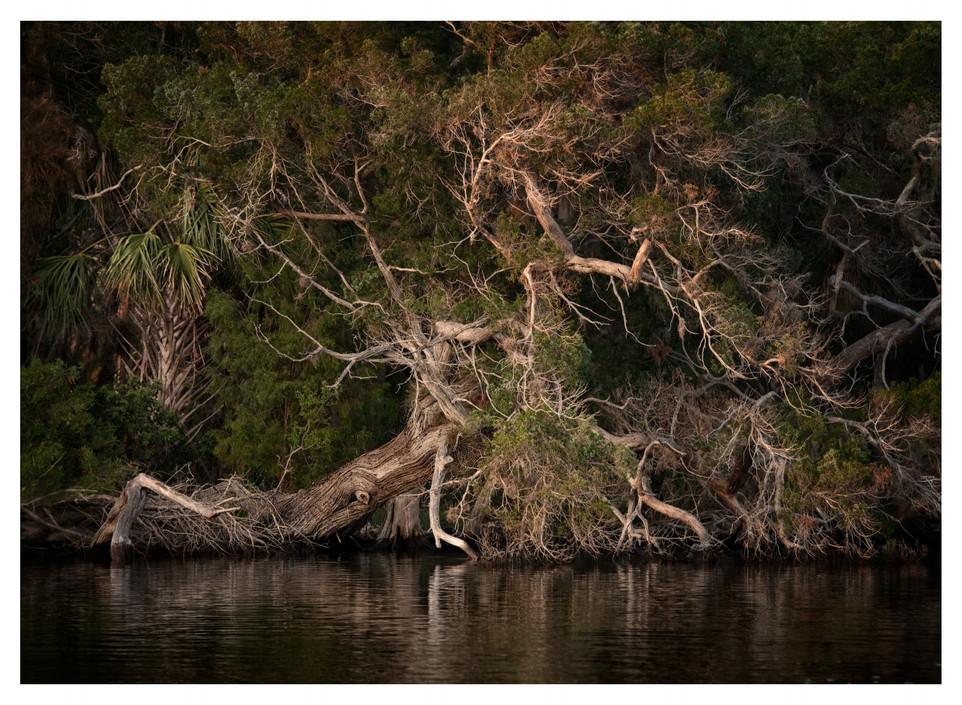 Homosassa River bank