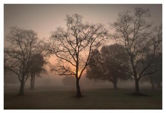 Sunrise on foggy morning in December, Plantation Resort, Crystal River, Florida