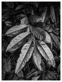 Leaf study, Big Canoe, Sanderlin Mountain, Dawson County, Georgia