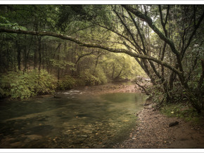 WEEK FORTY-ONE: DICK'S CREEK