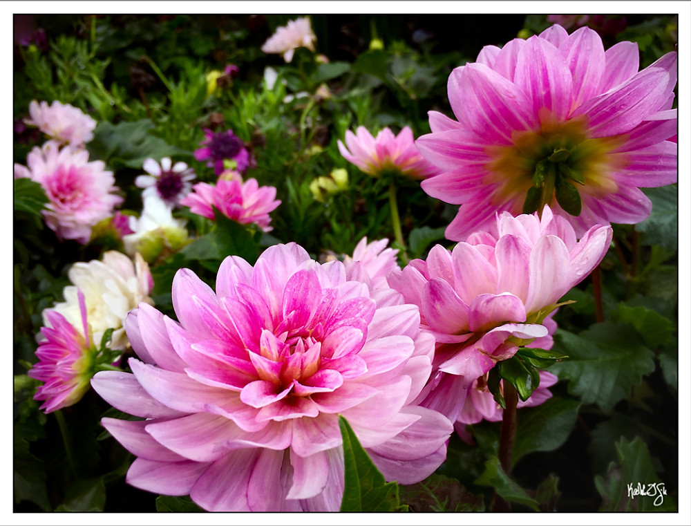 150327-flowers-012