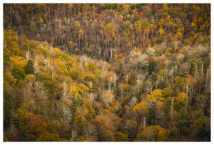View from Blue Ridge Parkway, North Caroling, Autumn