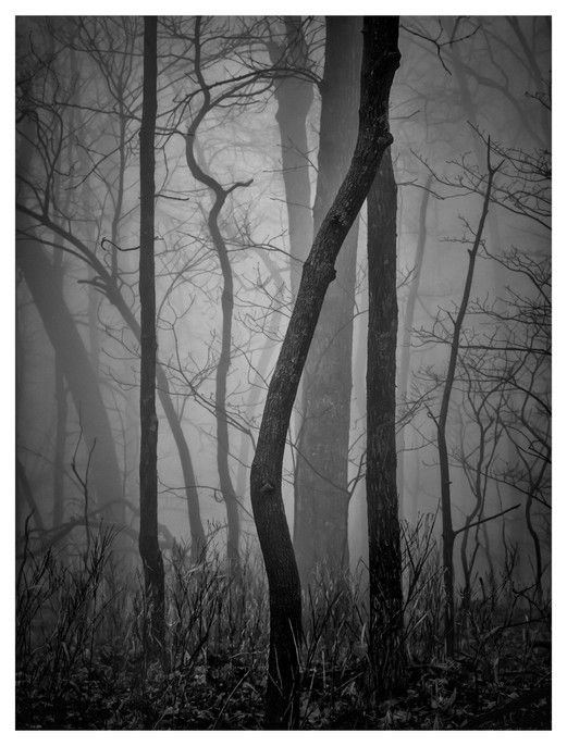Black and white, tree silhouette, fog
