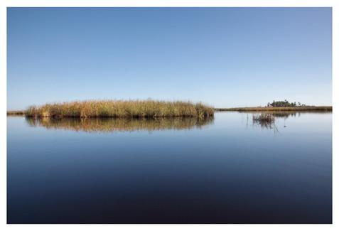 Salt Marsh from a kayak, calm, Homosassa River, Florida