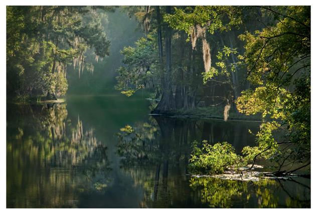 Morning sun through the swamp, Manatee Springs State Park, Florida
