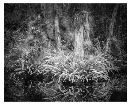 Everglades National Park, black and white