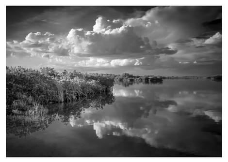 black and white landscape, saltwater marsh, homosassa, florida