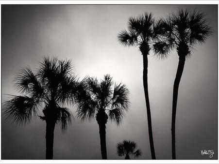 WEEK TWENTY-FIVE: FOG AND PALMS
