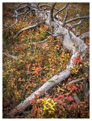 Fall in Grand Teton National Park