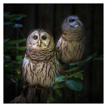 Two Owls, Homosassa Wildlife Park, Homosassa, Florida