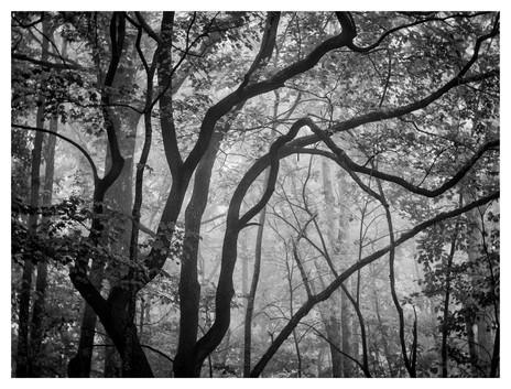 Black and white tree silhouette, woods, north georgia mountains