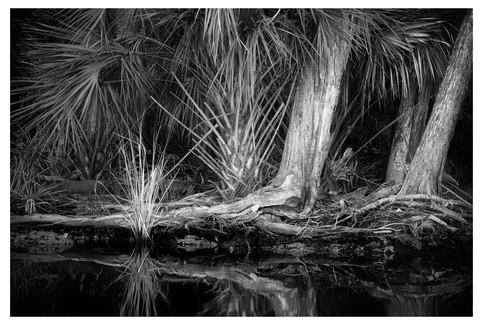 Creek bank, Price Creek, Homosassa, Florida