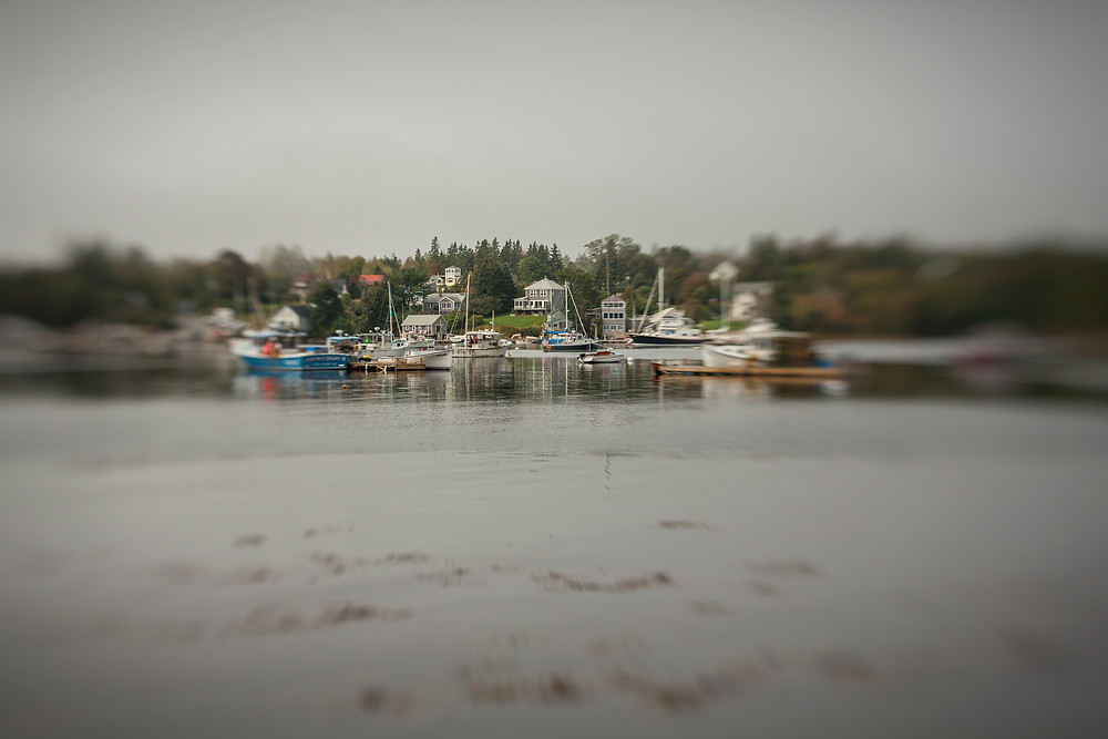 2011_Gill_Maine_2