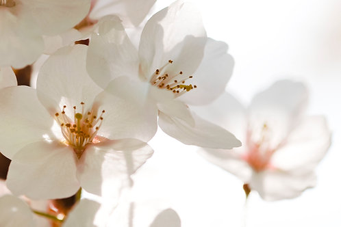 Flowers 93, Sang Soo Ryoo