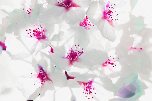 Flowers 92, Sang Soo Ryoo
