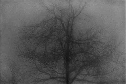 Tree - Wan Gyo Yi