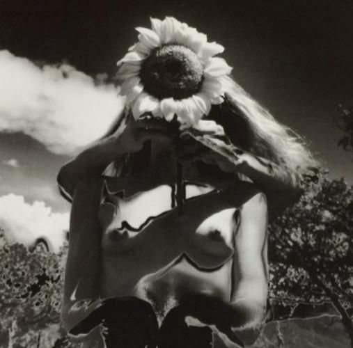 Sunflower song Colorado, Hosoe Eiko [Price on request]