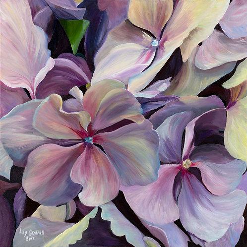 Hydrangea Dreams, Joy Connell