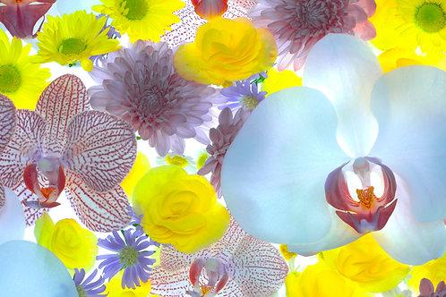 Flowers 97, Sang Soo Ryoo