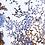 Thumbnail: Coral Blooming, Petra Meikle de Vlas