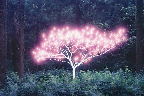 섬의 생명나무, 이정록 [가격요청]