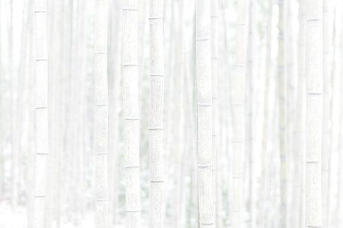 Bamboo, Sang Soo Ryoo